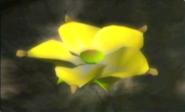 48goldencandypopbud