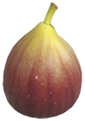 Treibhausfrucht