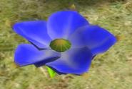Lapiz Lazuli Candypop Bud