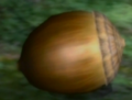 21Armored Nut