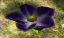 49violetcandypopbud