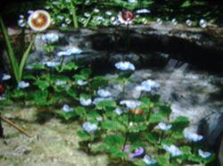 Figwort Blue