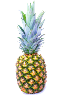 Pineapple-13718940674QS