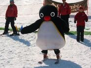 PinguSkiing