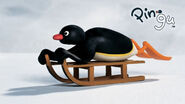 Cbeebies-pingu-img-pingu slide main