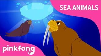 Kum ba hey, Walrus - Sea Animals Songs - Animal Songs - Pinkfong Songs for Children