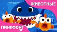 Акулёнок Песни про Животных Пинкфонг Песни для Детей