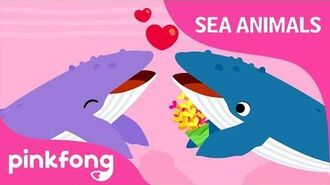 Singer Whale - Sea Animals Song - Learn Animals - Pinkfong Songs for Children