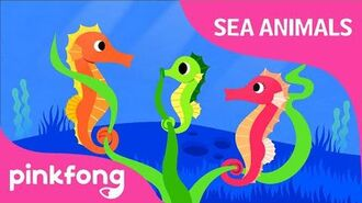 Hey-ho-hey, Seahorse - Sea Animals Song - Animal Song - Pinkfong Songs for Children