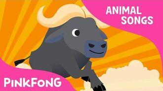 Follow Me Buffalo - Buffalo - Animal Songs - Pinkfong Songs for Children