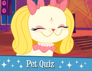 Pet Quiz