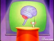 Brainstem (2)