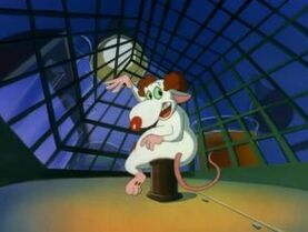 Pinky and the brain and larry 6906