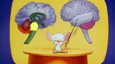 Pinky And The Brain - S01E03 Part 3 3 Brainstem