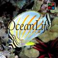PA Ocean Life jewelcase.jpg