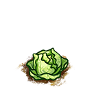File:Farm-cabbage-ripe.png
