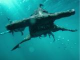 Cursed Hammerhead Shark