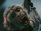 Jack (monkey)