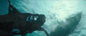 Undead shark