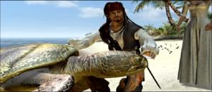 Sea turtles Jack
