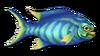 Fish 13
