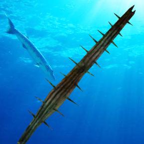 File:Barracuda water.jpg
