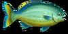 Fish 14