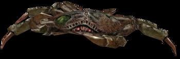 Crab transparent