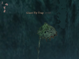 Giant Fly Trap
