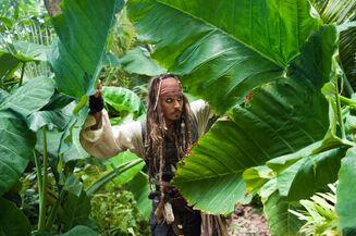 Jack nella giungla
