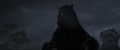 Brave-Bear3.png