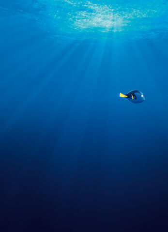 File:Finding Dory Textless 05.jpg