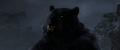 Brave-Bear5.png