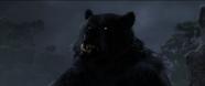 Brave-Bear5