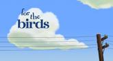 Coisas de Pássaros