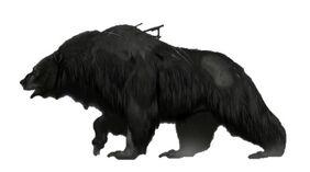 Bear dead eye