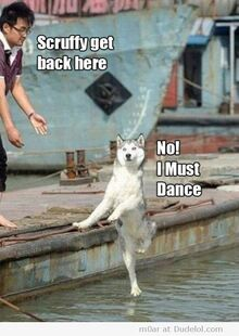 Scruffy-get-back-here-no-i-must-dance