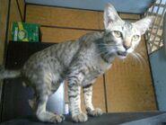 Ericy Cats B 040 20100611