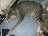 Ericy Cats B 039 20100611