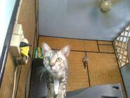 Ericy Cats B 034 20100611