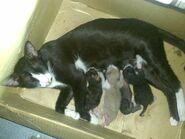 Ericy Cats B 076 20100614