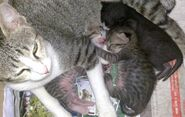 Ericy Cats B 022b 20091016