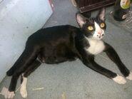 Ericy Cats B 043 20100611