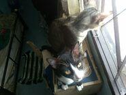 Ericy Cats B 042 20100611