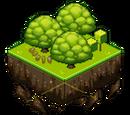 Andromeda Oak