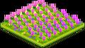 Tulip Field 2.png