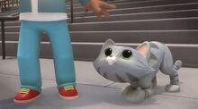 Cute cat (2)