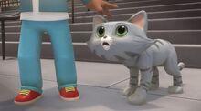 Cute cat (1)