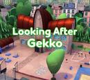 Looking After Gekko