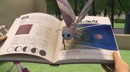 A moth on Amaya's book